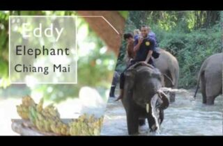 Video thumbnail for youtube video Elephant Trekking Chiang Mai | Chiang Mai trekking