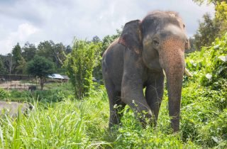 Closer to the elephants: 1 day with elephants and 1 day private trek