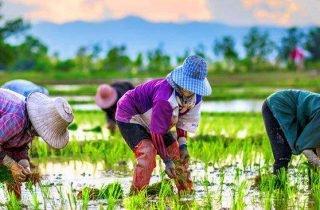Newsletter en français sur la Thailande